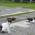 ペットの多頭飼いや高齢者のペット飼育によるごみ屋敷